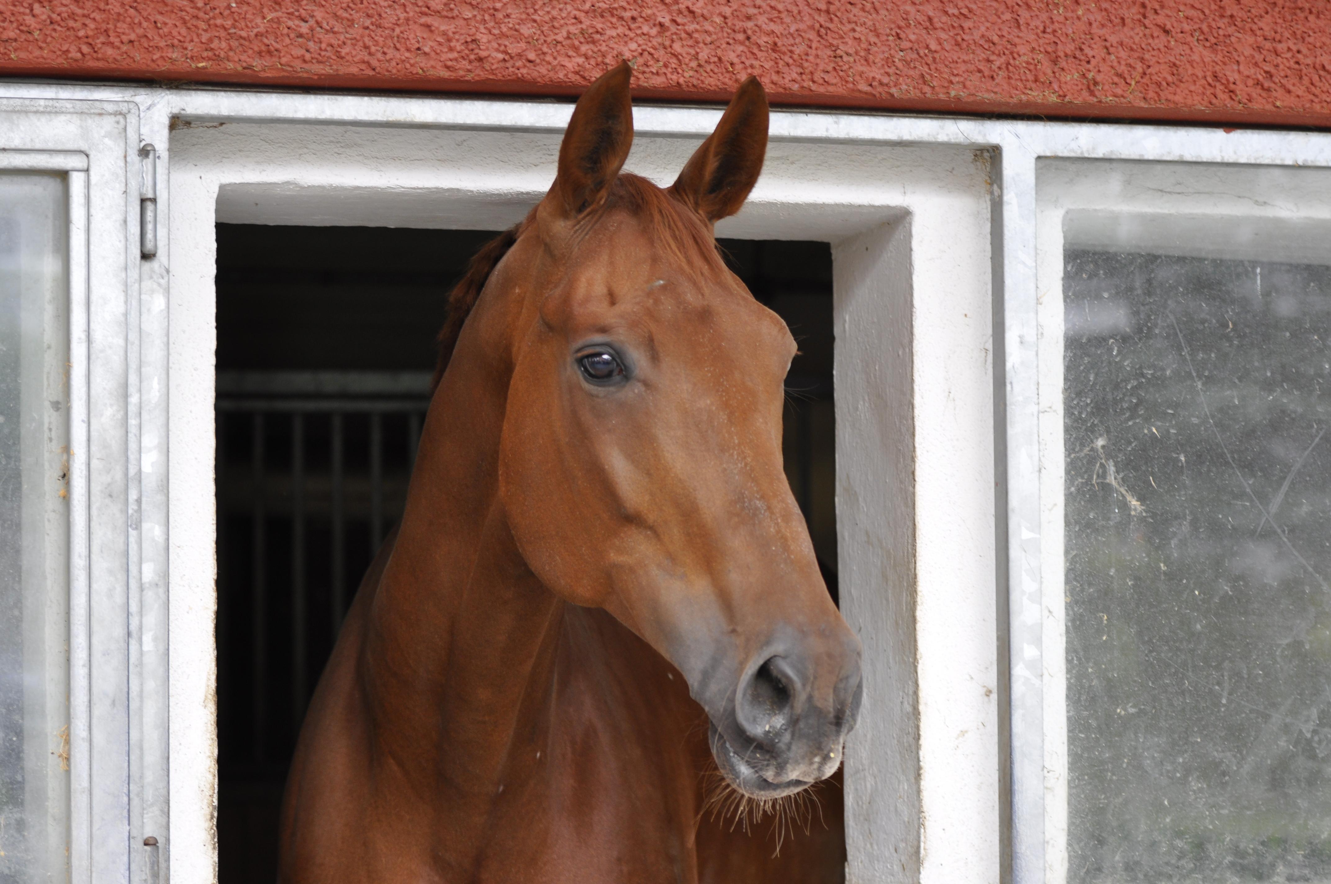 Pferdevokabular Deutsch-Englisch