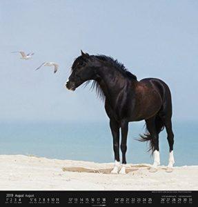 Pferdekalender-287x300