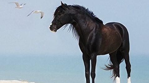 Pferdekalender-479x266