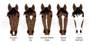 Abzeichen-Pferdekopf-horse-facial-markings-300x153