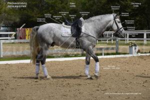 Pferdeausrüstung-horse-equipment-300x200