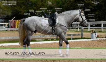 Pferdevokabular Englisch Deutsch