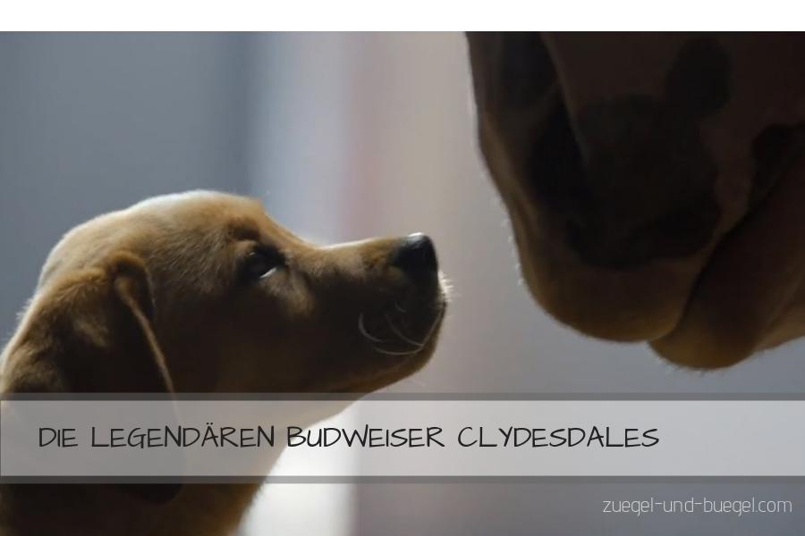 Die besten Budweiser Clydesdale-Werbespots!