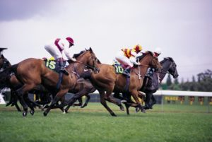 Atmung-beim-Pferd-300x201