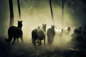 Pferdeherde--300x199