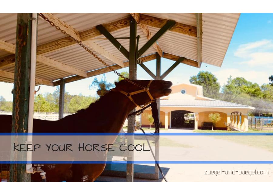 Pferde richtig kühlen