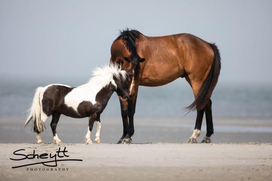 Pferdefotografie-Pferdefreundschaft-900x600