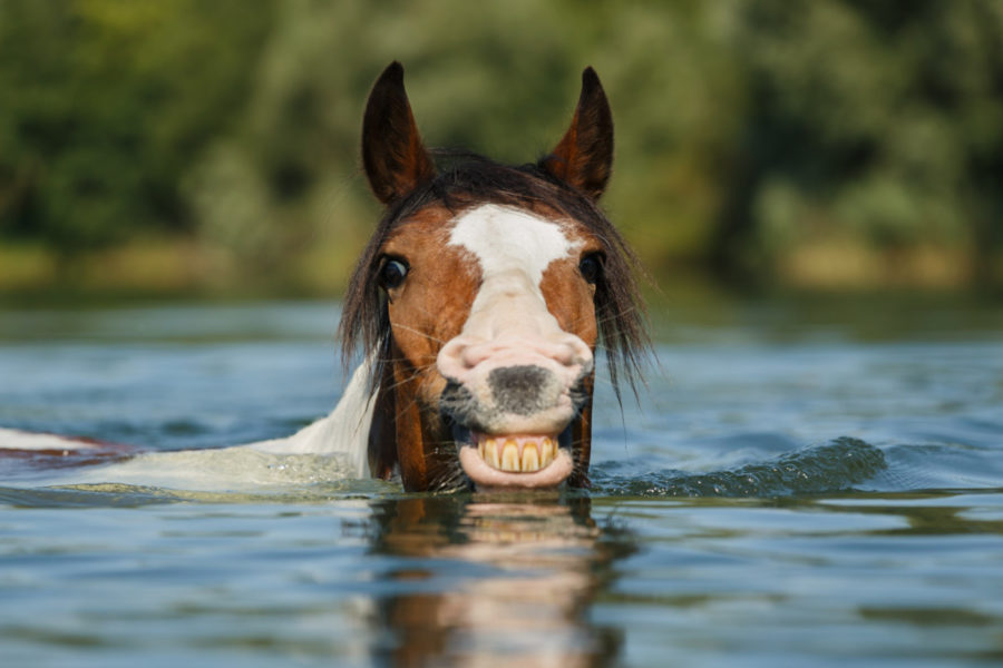 Pferdefotografie-Wasser-900x600