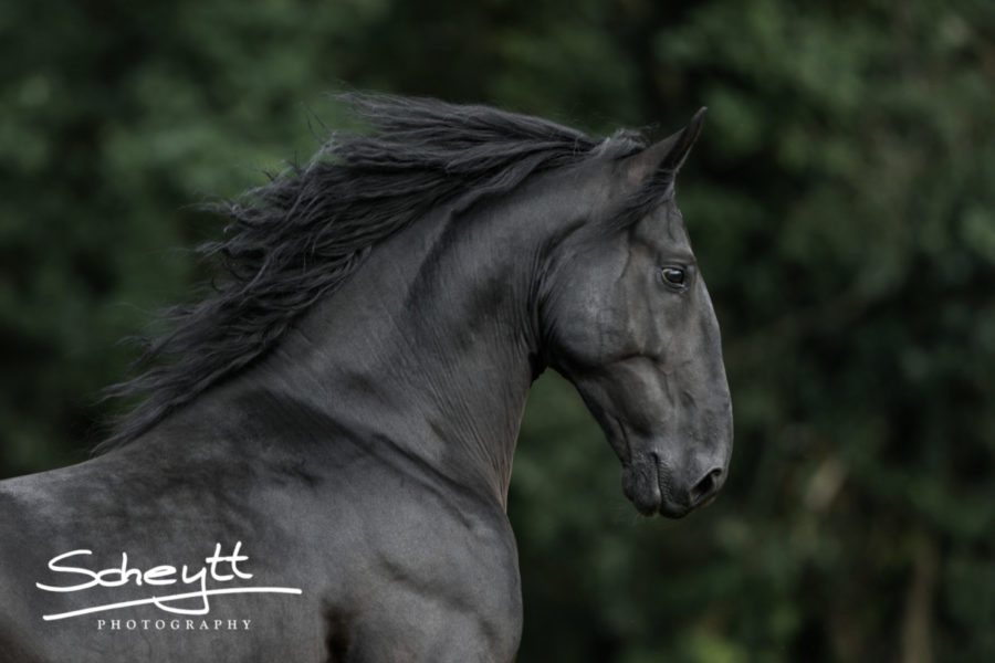 Pferdefotoshooting-Friese-900x600