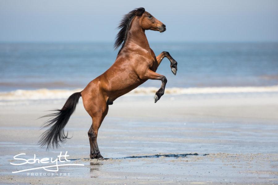 Pferdefotoshooting-Strand-900x600
