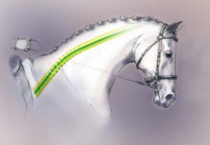 Pferd-zieht-ans-Gebiss-300x208