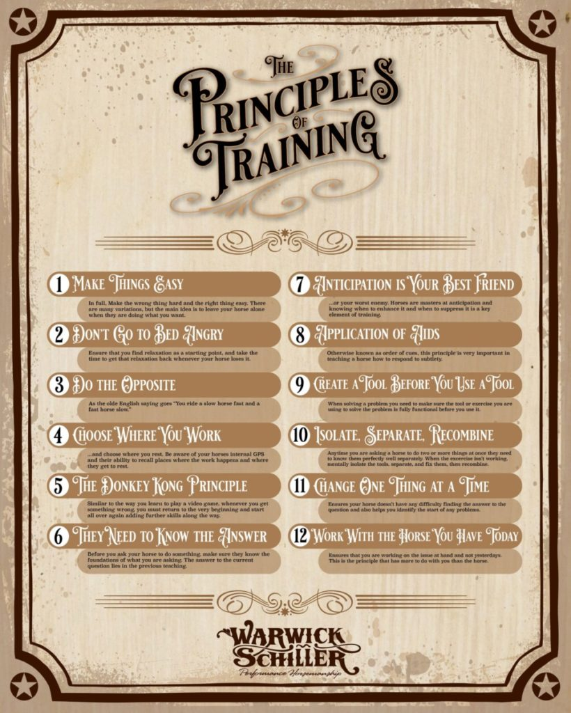 Principles-of-horse-training-820x1024